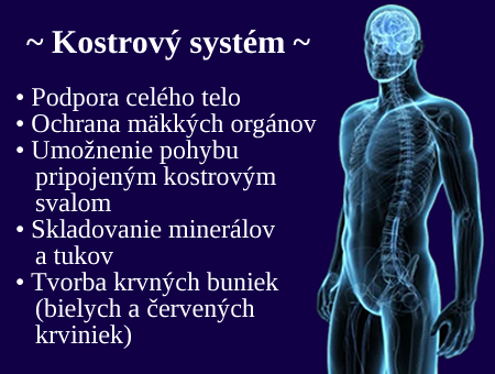 kostrovy system