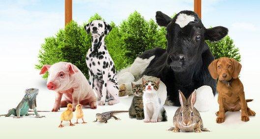 kremelina-diatomplus-zvierata